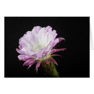 Princess Anne Echinopsis Hybrid flower Card