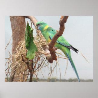 Princesse Parrot Bird Poster
