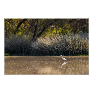 Print: Egret Hunting In Pond 2 Poster