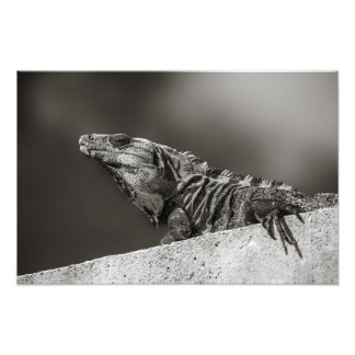 Print - Iguana on Wall - Riviera Maya, Mexico
