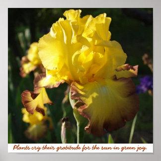"Print ""Plants cry their gratitude for the sun..."""