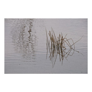 Print: Reed Reflections