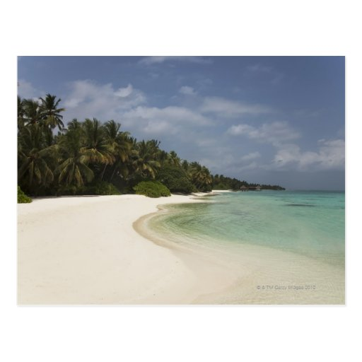Pristine beach and coconut palms. postcard
