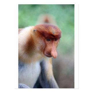 Proboscis monkey Labuk Bay Borneo Postcard