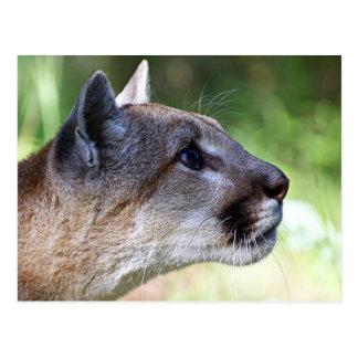 Profil de puma carte postale