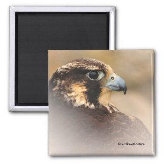 Profil de Vignetted d'un faucon pérégrin Magnet Carré