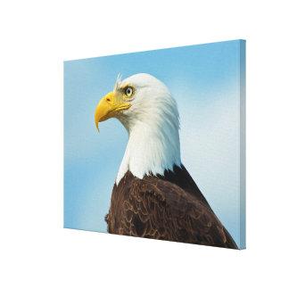 Profile Of A Bald Eagle Canvas Print