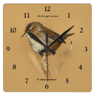 Profile of a Beautiful Marsh Wren Clocks