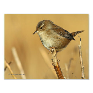 Profile of a Beautiful Marsh Wren Photo Print