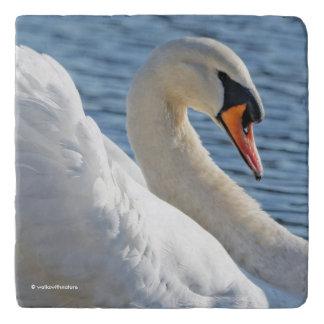 Profile of a Beautiful Sunlit Mute Swan Trivet