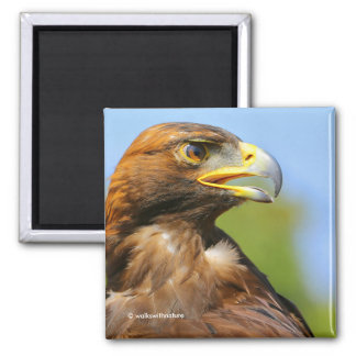 Profile of a Golden Eagle in the Summer Sun Magnet