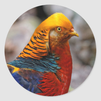 Profile of a Golden Red Pheasant Classic Round Sticker