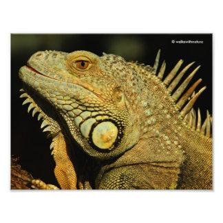 Profile of a Green Iguana Photographic Print