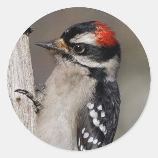 Profile of a Male Downy Woodpecker Round Sticker