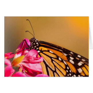 Profile of a Monarch Butterfly Card