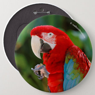 Profile of a Pretty Green-Winged Macaw 6 Inch Round Button