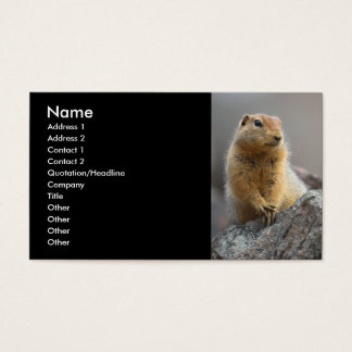 profile or business card, squirrel business card