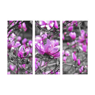 Profuse Magnolia Blooms Triptych Canvas Print