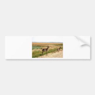 Pronghorn Antelope Bumper Sticker