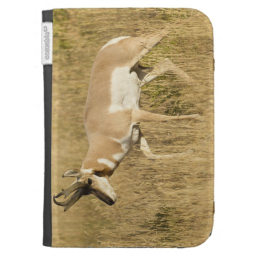 Pronghorn, Antilocapra americana, in a field Case For Kindle