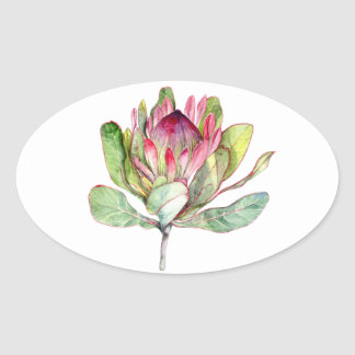 Protea Flower Oval Sticker