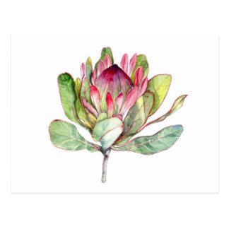 Protea Flower Postcard