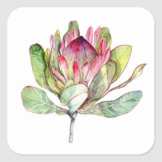 Protea Flower Square Sticker