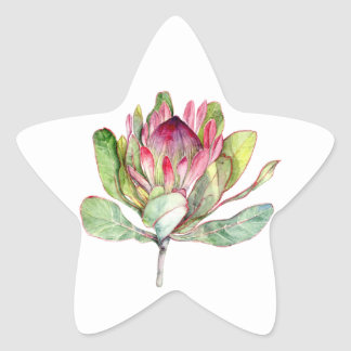 Protea Flower Star Sticker