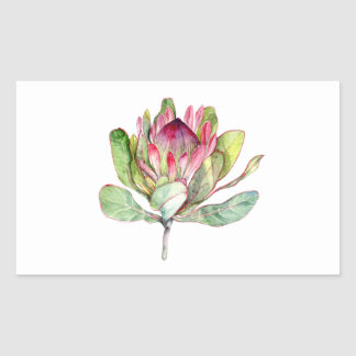Protea Flower Sticker