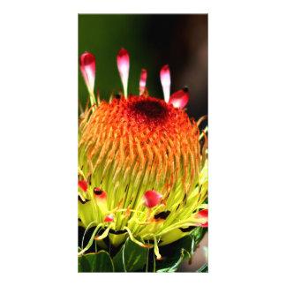 Protea Photo Card