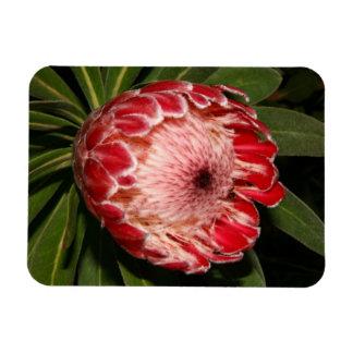 Protea Rectangular Photo Magnet