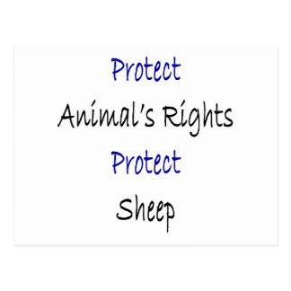 Protect Animal s Rights Protect Sheep Post Cards