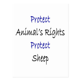 Protect Animal s Rights Protect Sheep Post Card