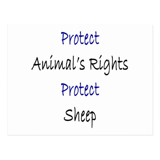 Protect Animal's Rights Protect Sheep Post Cards