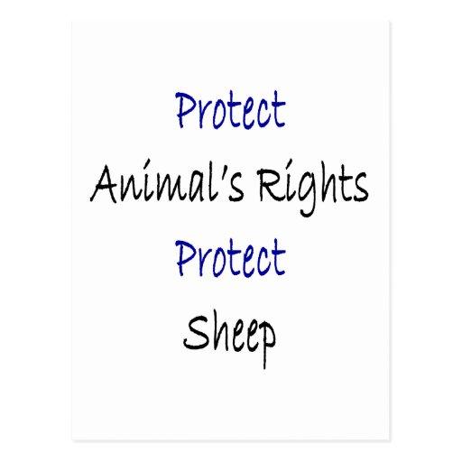 Protect Animal's Rights Protect Sheep Post Card