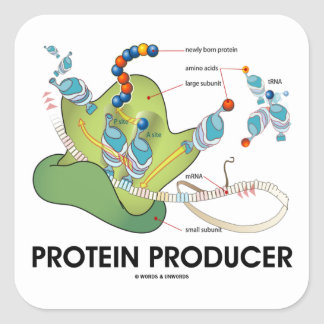Protein Producer (mRNA tRNA Protein Synthesis) Square Sticker