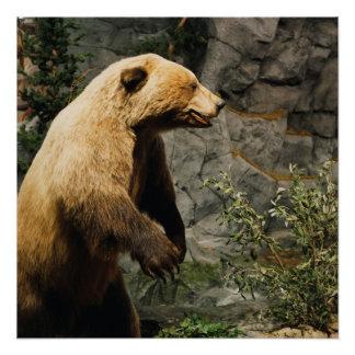Proud Bear Perfect Poster
