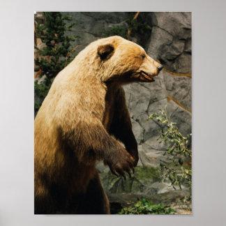 Proud Bear Poster