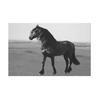 Proud Friesian black stallion Canvas Print