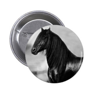 Proud Friesian black stallion horse Pinback Buttons