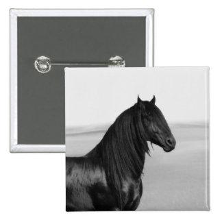 Proud Friesian black stallion horse Button