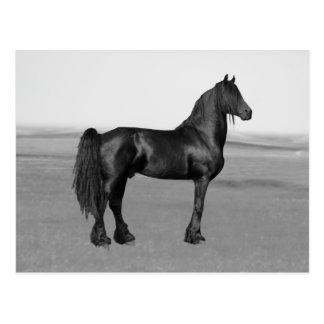 Proud Friesian black stallion horse Post Card