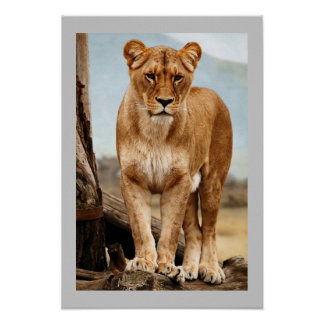 Proud Lioness Poster