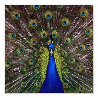 Proud Peacock Invitation