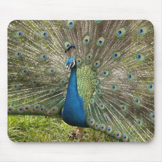 Proud Peacock Mouse Pad