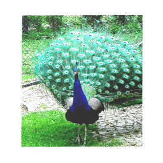 Proud peacock notepad