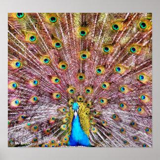 Proud Peacock Poster or Print