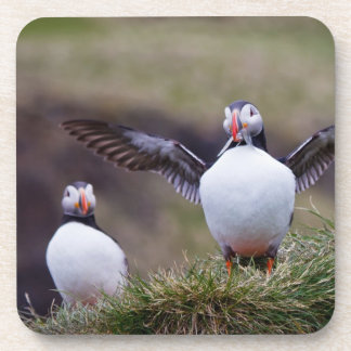 Proud Puffin Coaster