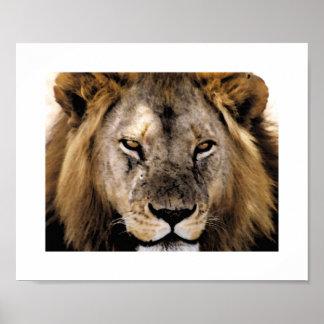 Proud Simba - Serengeti Poster