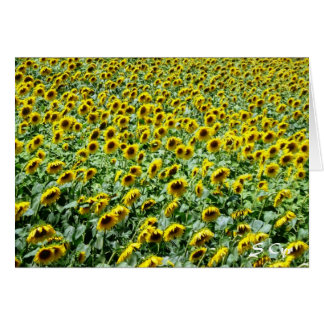 Provencial Sunflowers Card